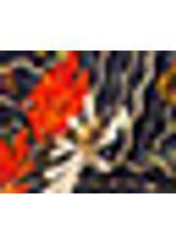 518160_515_1_M_CALCA-PANTALONA-EST-BLU